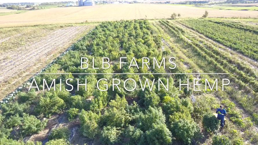 Amish Hemp Farm