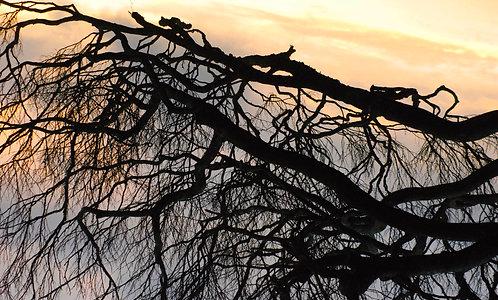 Rattery Ridge