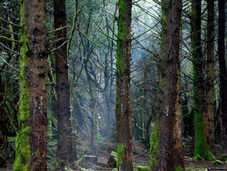 Into The Woods at Willow, Totnes                    Carole Whelan  - Photography