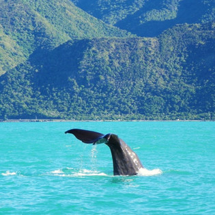 Whale Watching - Kaikoura, New Zealand