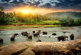Herd of elephants bathing in the jungle