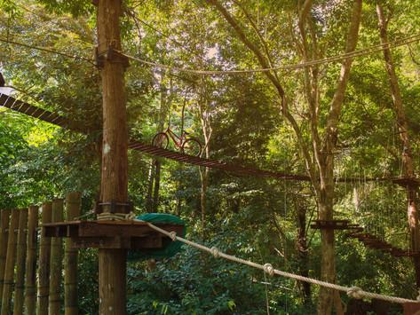 High Ropes, Tree Tops and Tarzan Swings - Go Ape Whinlatter, Cumbria