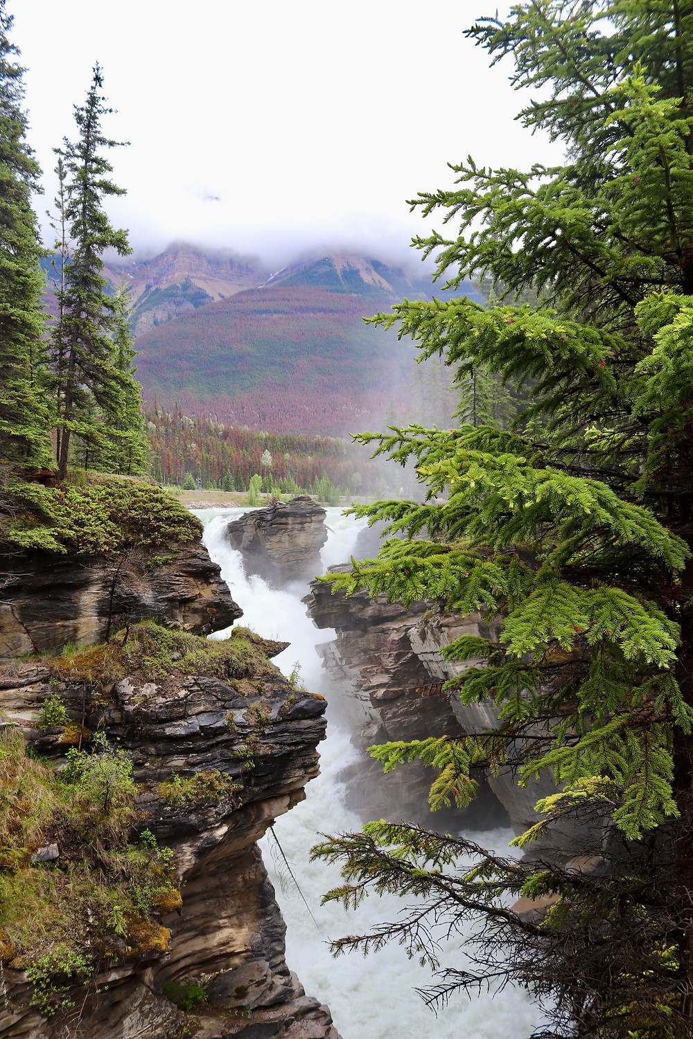 Athabasca River and Falls, Jasper National Park, Canada