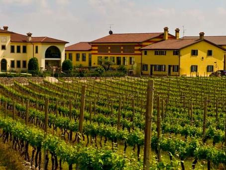 Custoza Wine from Veneto, Italy