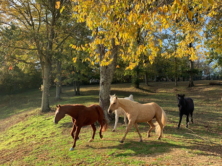 Musings from a Ranch Hand Inspired by our Horse Friends