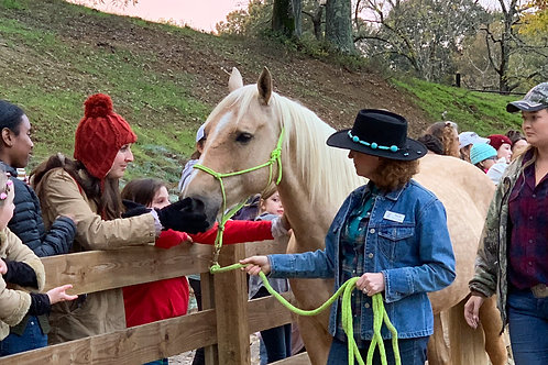 $50 Partial Horse Sponsorship