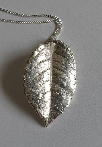 Large Leaf Pointed Tip