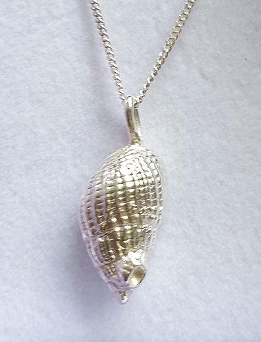 Silver conch plain