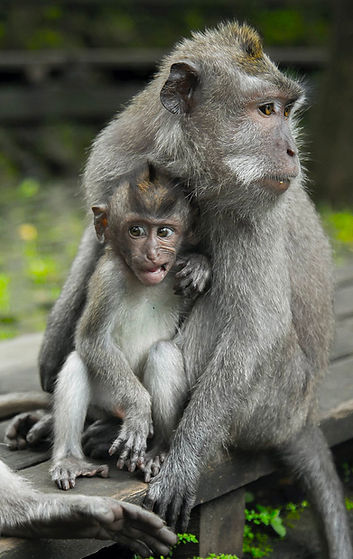 Sebastian_Voortman_Monkeys.jpg