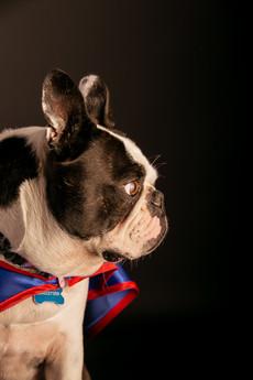 Superdog - Super chien - Bouldogue