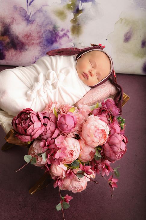 Naissance / lapin /fleurs