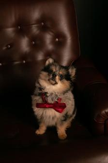 Cut dog - little dog - petit chien