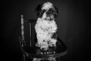 Friandse pour chien - chaise haute - beautiful dog