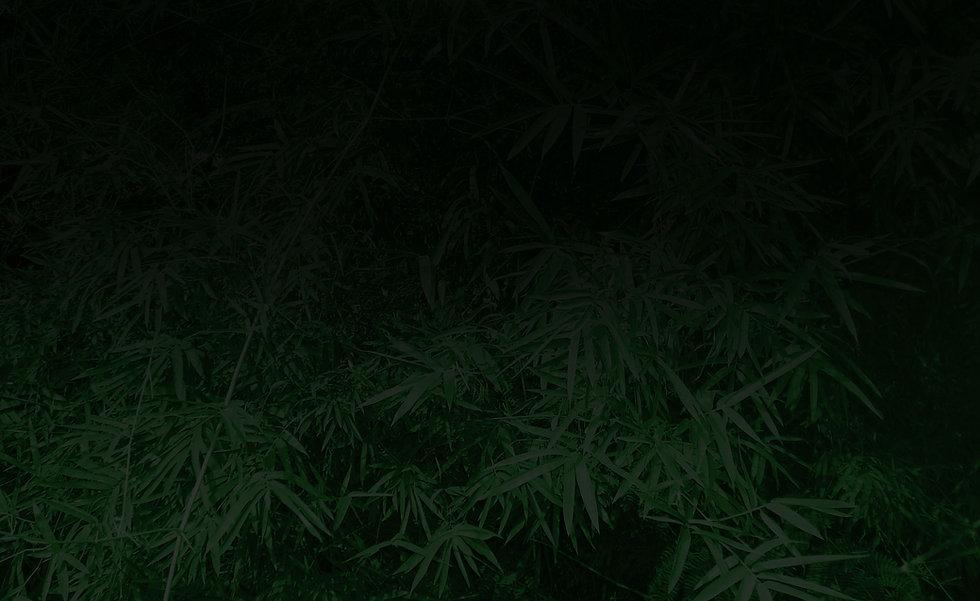 bg-image-bamboo3.jpg