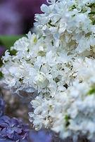 1_White Flowers.jpg
