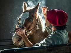 luz sobre caballo.jpg