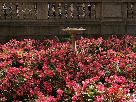 Flowers at Bryant Park.jpg