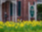 Spring-Flowers-3.JPG