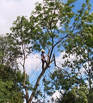 Tree Surgeon in Shenley