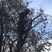 Tree Surgeon Borehamwood
