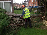 Tree Surgeon London Colney
