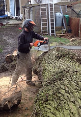 City Tree Services, removal of a tree in Hertfordshire