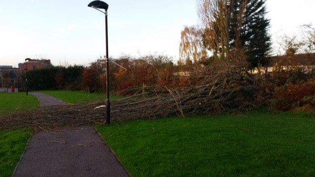 Emergency Tree Removal Borehamwood