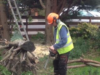 Tree Surgeon Barnet