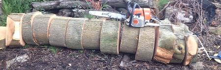 Tree Surgeon Hendon