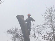 Tree Surgeon in Enfield