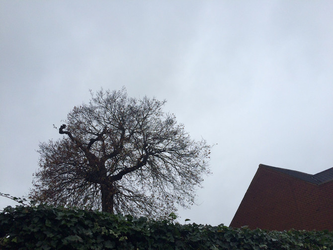 Tree Removal Finchley - Tree Surgeon Finchley