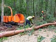 Tree Surgeon Radlett
