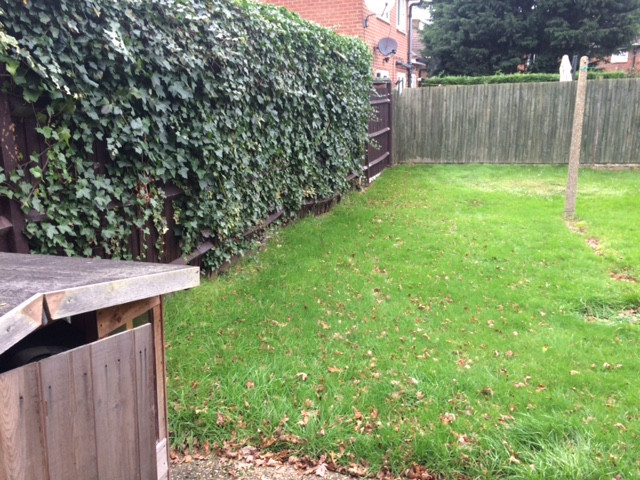 Ivy Clearance in Borehamwood