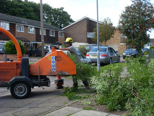 Tree Services in Bushey