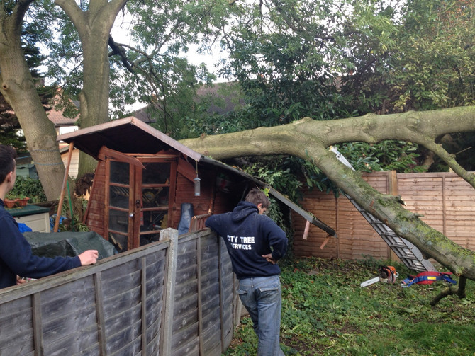 Emergency Tree Removal - Tree Surgeon Hatfield