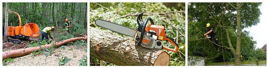 Tree Surgeon North London