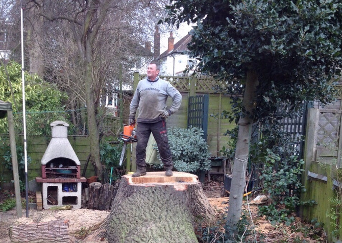 Tree Felling in Edgware