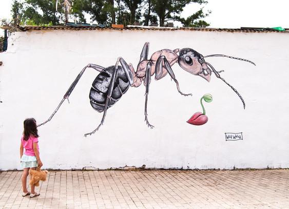 Seeds Huelva, Spain. 2017