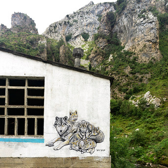 Raised by Wolves Picos de Europa, Spain 2021