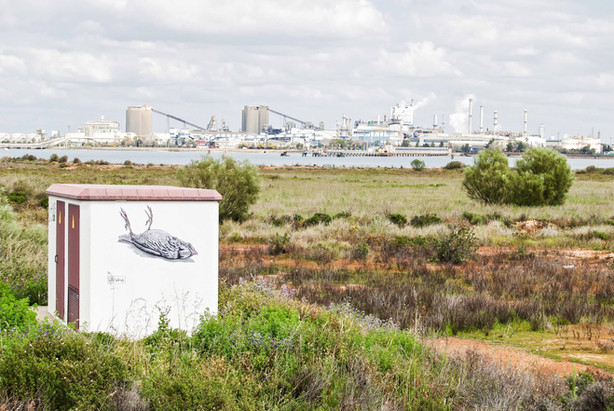Death Paraje Natural Marismas del Odiel, Huelva. Spain. 2016