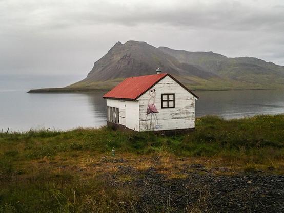 Flamingos around the world Iceland. 2015