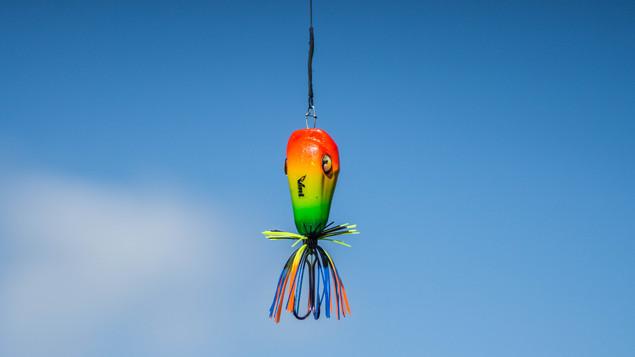 Predator Tricolor