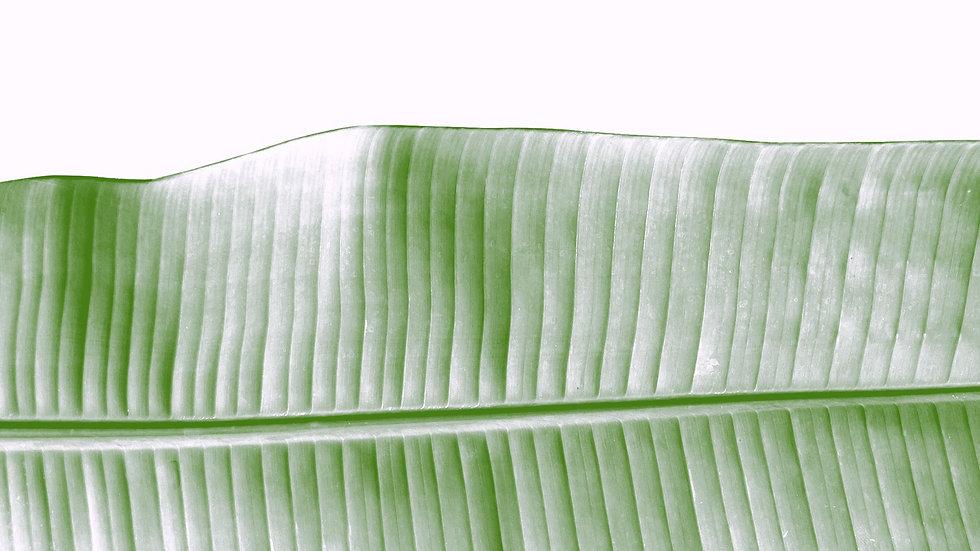 Leaf%2520Beauty_edited_edited.jpg