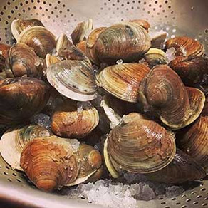 Steamed Clams (or Mussels)