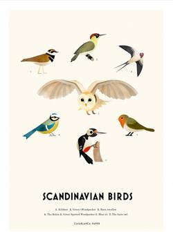 Scandinavian-birds-web