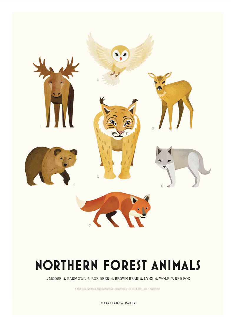 Northern Forest Animals