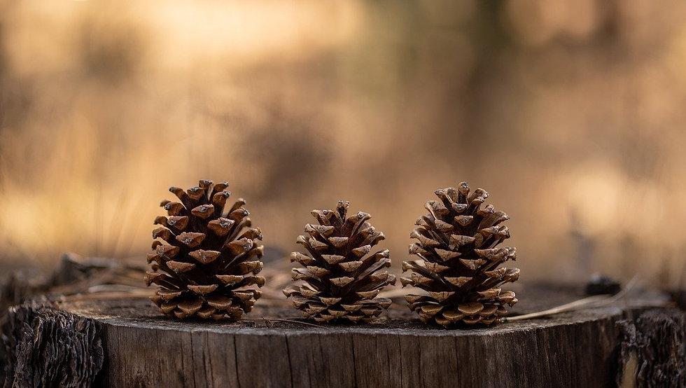 pinecones-4762992_1280_edited.jpg