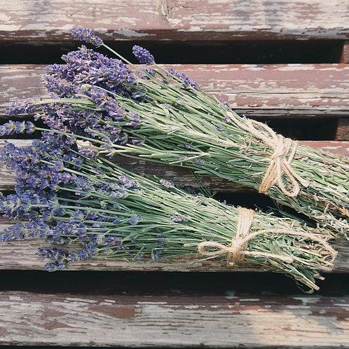 Lavender -OYSA