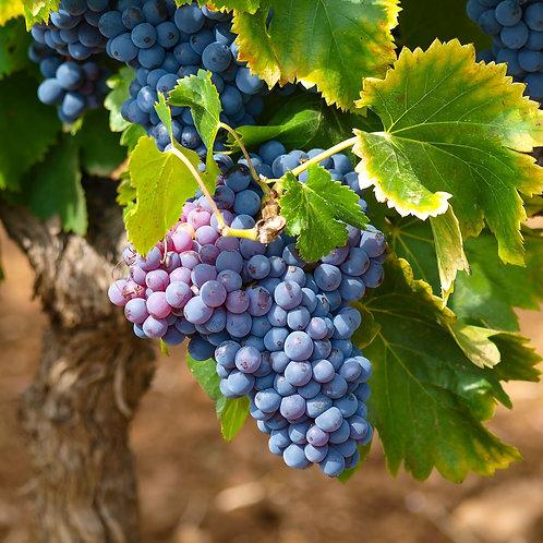 Tuscan Grape -8 oz Mason Jar