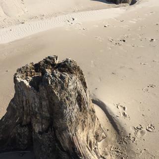 Bałtycka plaża